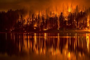lake night forest fire