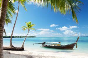 landscape beach sea palm trees
