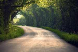 landscape blurred grass road trees nature tunnel path