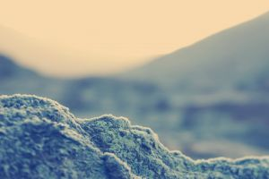 landscape bokeh blurred depth of field closeup