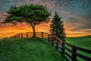 landscape fence trees sunlight nature grass