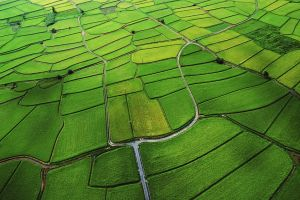 landscape field agro (plants)