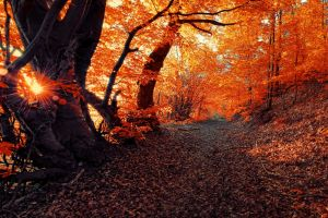 landscape forest fall seasons nature sunset