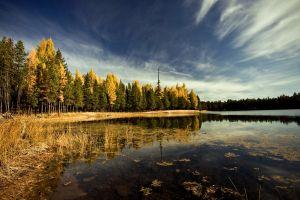 landscape forest leaves lake sky trees