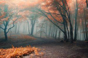 landscape forest trees dirt fall nature fallen leaves mist