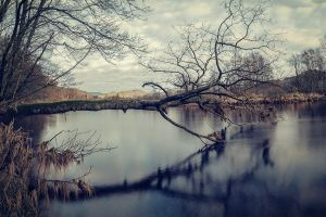 landscape lake nature winter trees
