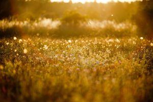 landscape macro grass