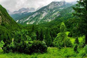 landscape nature forest austria
