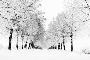 landscape nature snow trees cold winter