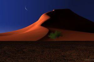 landscape night trees dune desert nature moon