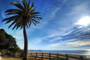 landscape sea palm trees clouds beach