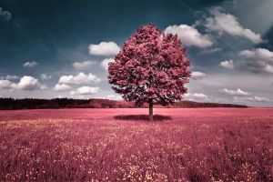 landscape sky photo manipulation trees field clouds digital art trees