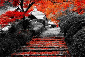 landscape stairs lotus flowers trees flowers nature selective coloring