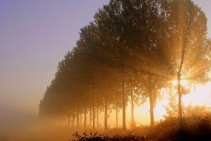 landscape sunlight trees nature