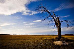 landscape trees sky field