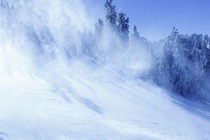 landscape winter snow pine trees trees