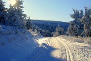 landscape winter sunlight forest snow nature