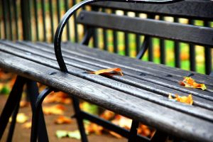 leaves central park fall bench