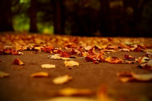 leaves fall depth of field