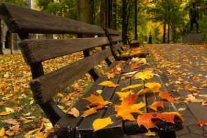 leaves fall pavements bench