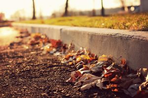 leaves fall urban