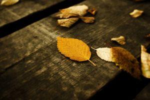 leaves fall wood