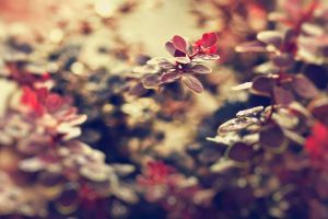 leaves flowers nature macro