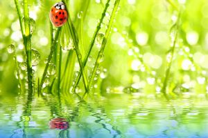 leaves insect nature water drops reflection animals