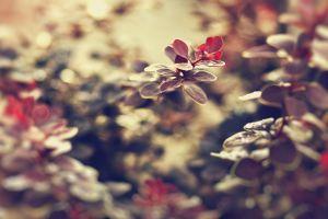 leaves macro depth of field