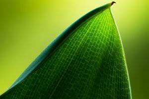 leaves macro green