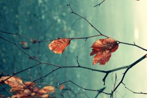 leaves macro nature fall depth of field