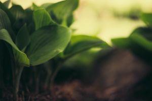 leaves macro plants depth of field nature