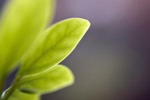 leaves photography plants macro