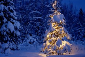 lights night christmas snow winter trees