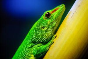 lizards animals reptiles