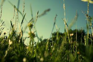 macro field grass plants