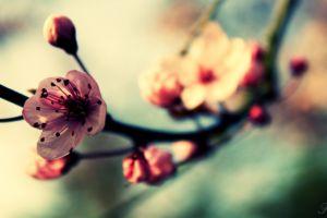 macro flowers nature
