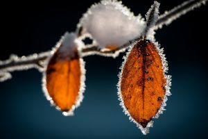 macro frost leaves ice nature