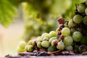 macro fruit grapes