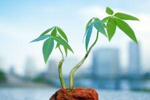 macro green leaves cyan plants