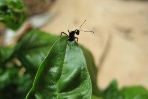 macro leaves insect ants animals macro basil