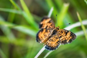 macro nature grass orange insect green butterfly