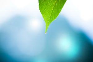 macro photography plants nature green bokeh leaves blue water drops