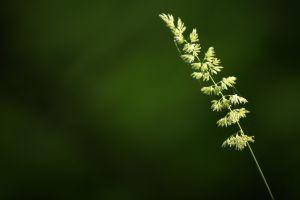 macro plants closeup
