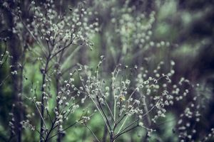macro plants nature outdoors