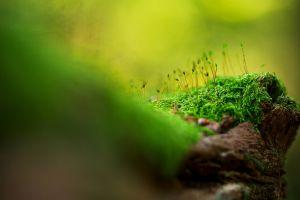 macro wood bokeh moss nature closeup plants green