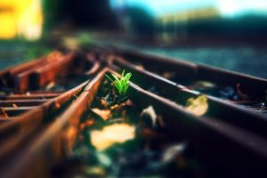 metal railway plants bokeh
