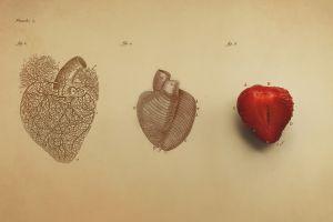 minimalism fruit text medicine digital art organs drawing infographics simple strawberries heart veins vintage biology  simple background