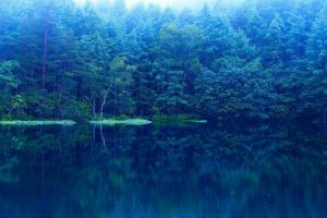 mirror forest lake nature