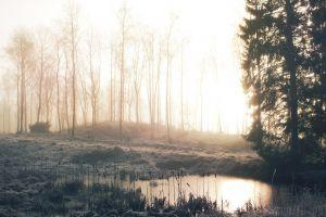 mist creeks morning forest lights